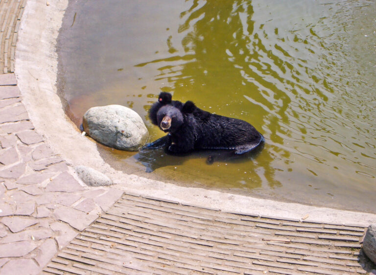 A Visit to the Animals Asia Moon Bear Rescue Centre in Chengdu