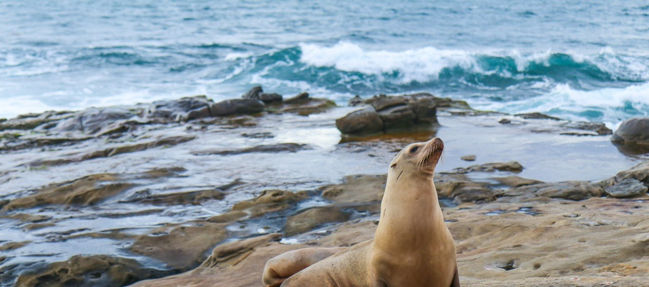 San Diego Family Vacation Planning Guide La Jolla Mom