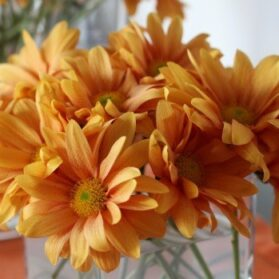 How To Make An Inexpensive Flower Arrangement With Chrysanthemums