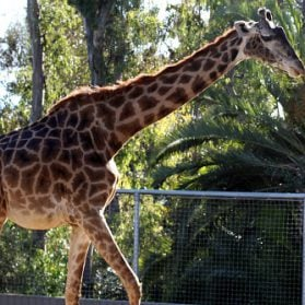 10 Reasons Why You Should Go To The San Diego Zoo
