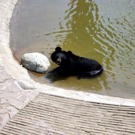 A Visit to the Animals Asia Moon Bear Rescue in Chengdu