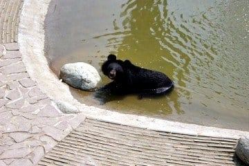 Animals Asia Moon Bear Rescue