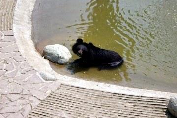Animals Asia Moon Bear Rescue