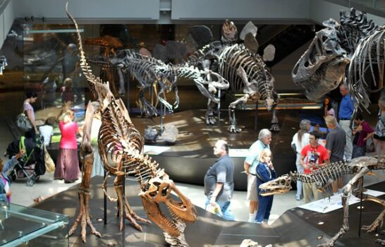 Dinosaurs Within Driving Distance:  Natural History Museum of Los Angeles