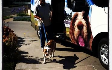 Markim Pet Resort Dog Camp