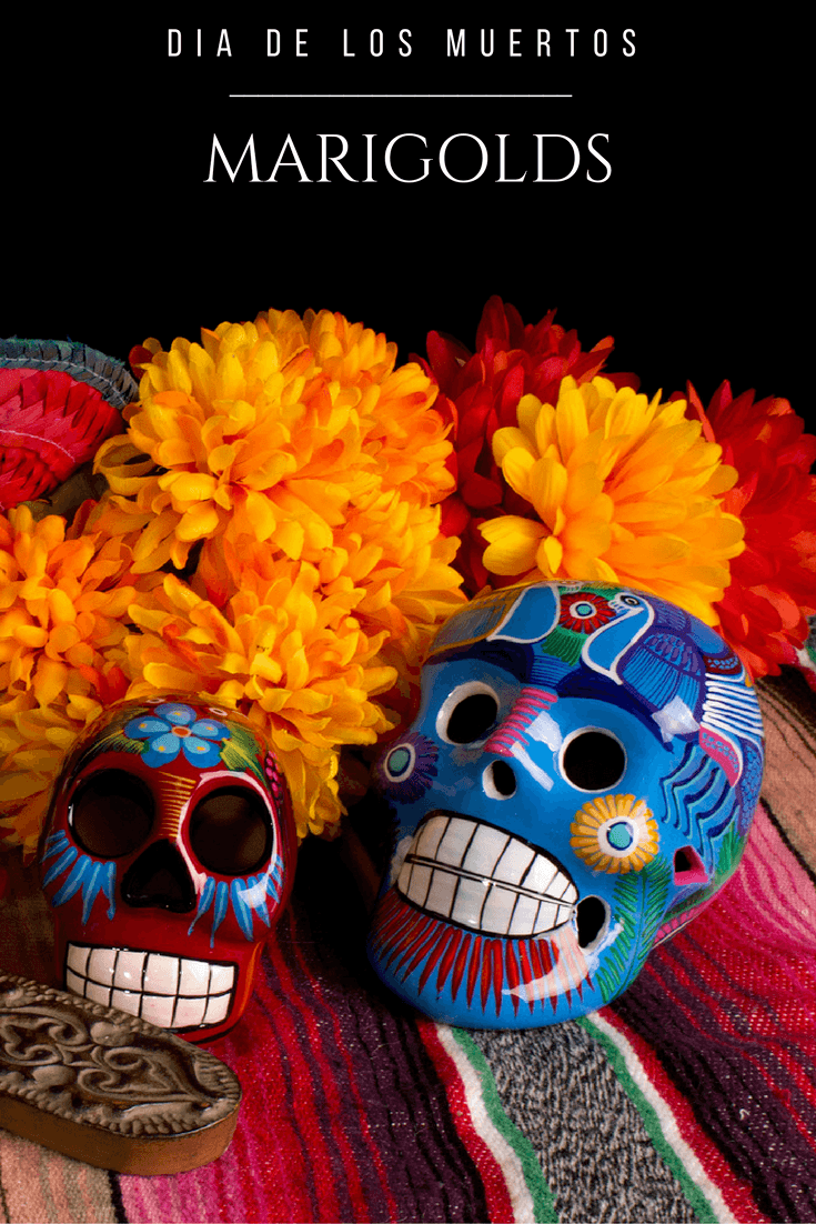 Learn More About Role That Marigolds Play In Dia De Los Muertos Celebrations