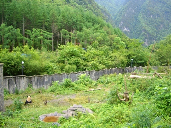 Wolong Nature Reserve Sichaun Mountains