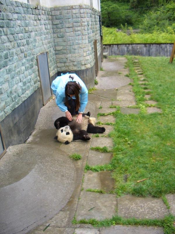 Wolong Panda Reserve Chengdu China