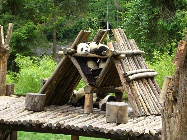 Wolong Panda Reserve Enclosure