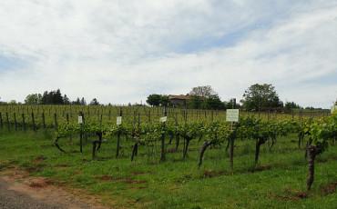 willamette valley wine travel destination