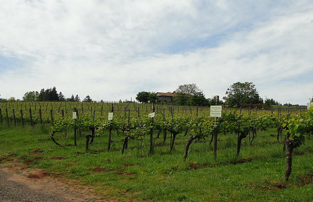 willamette valley wine travel destination