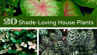 HGTVGardens Indoor Shade House Plants Container Gardening