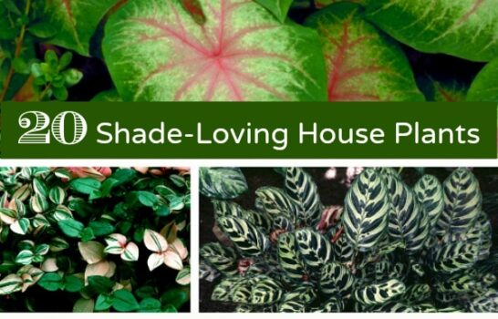 20 Gorgeous House Plants That Can Take Full Shade