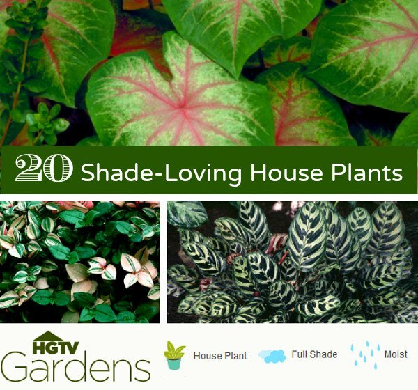 20 Gorgeous Indoor Shade House Plants | Container Gardening