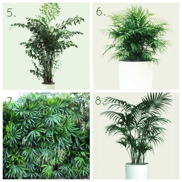 HGTVGardens Indoor Shade Palm Trees