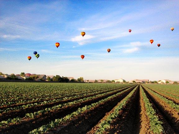 Yuma lettuce with balloons credit Gowan
