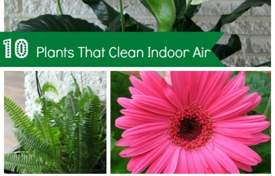 10 Common House Plants That Help Clean Indoor Air