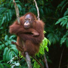 Orangutan Friendly Sustainable Palm Oil Halloween Candy List