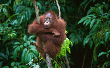 Orangutan Friendly Sustainable Palm Oil Candy