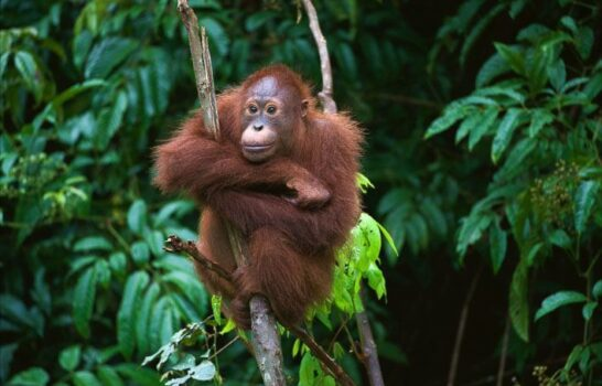 Orangutan Friendly Sustainable Palm Oil Halloween Candy List