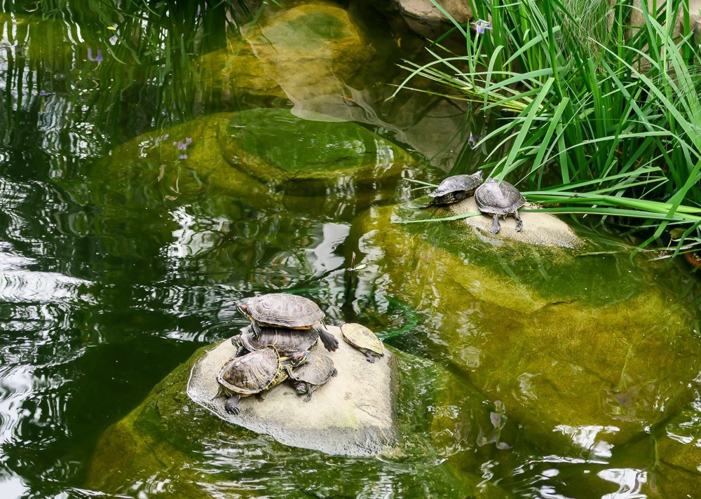 Kids will love the koi fish and turtles at Hong Kong Park.