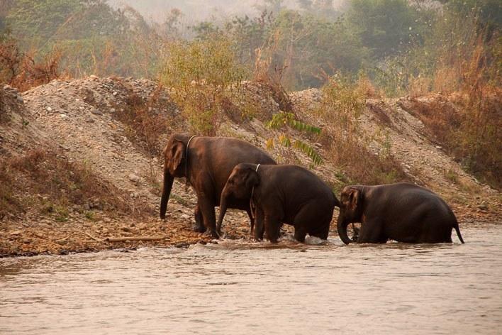 Chiang Mai Thailand Elephants