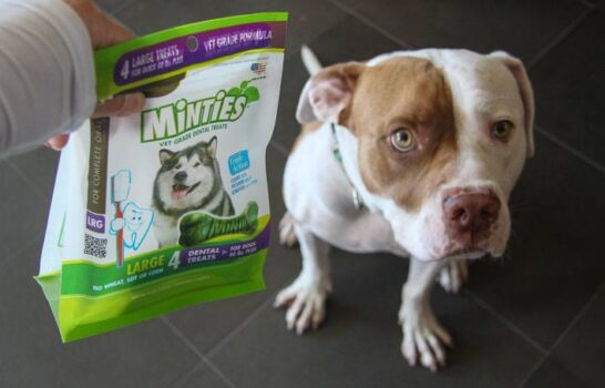 Luxe Pet: Keeping Mouths Minty Fresh