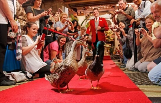 Tales from the Duckmaster at The Peabody Memphis Hotel
