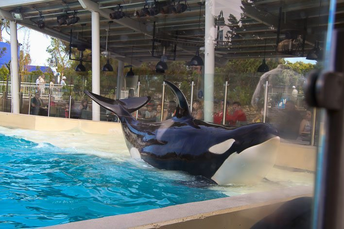 Dine with Shamu at SeaWorld San Diego-Whale