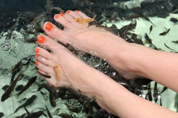 Fish Spa Pedicure by Doctor Fish, Garra Rufa
