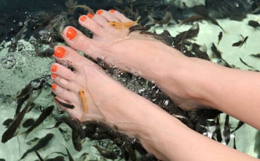 Fish Spa Pedicure by Doctor Fish, Garra Rufa