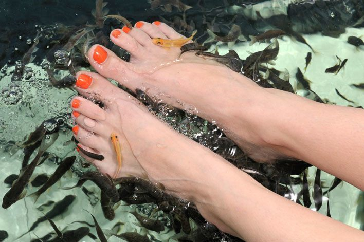 Here S What A Fish Spa Pedicure Is Really Like La Jolla Mom