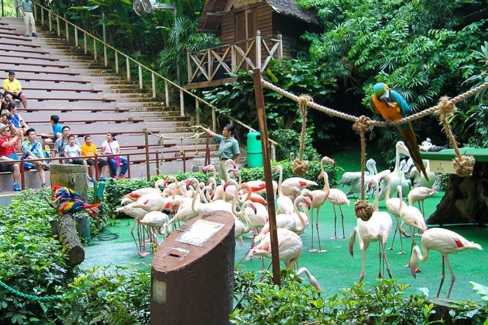 Singapore with Kids- Jurong Bird Park High Flyers Show