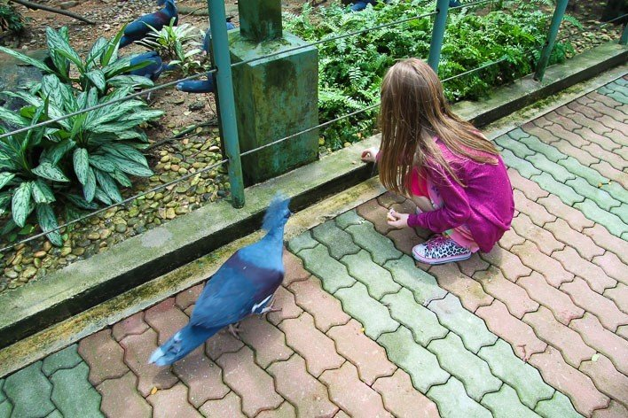 Singapore with Kids- Jurong Bird Park Pigeons