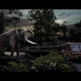 Tips for Visiting Night Safari Singapore