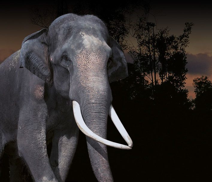 Singapore with Kids Night Safari Elephant