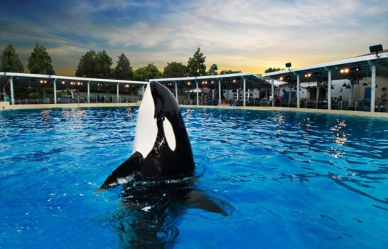 Should You Dine With Shamu At SeaWorld San Diego?