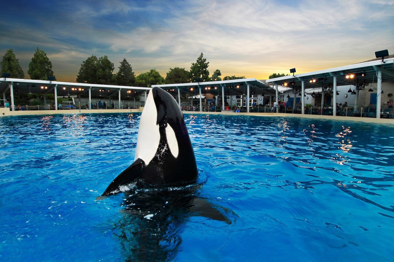 Should You Dine With Shamu At Seaworld San Diego