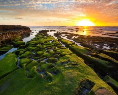 20 FREE Things to Do in La Jolla