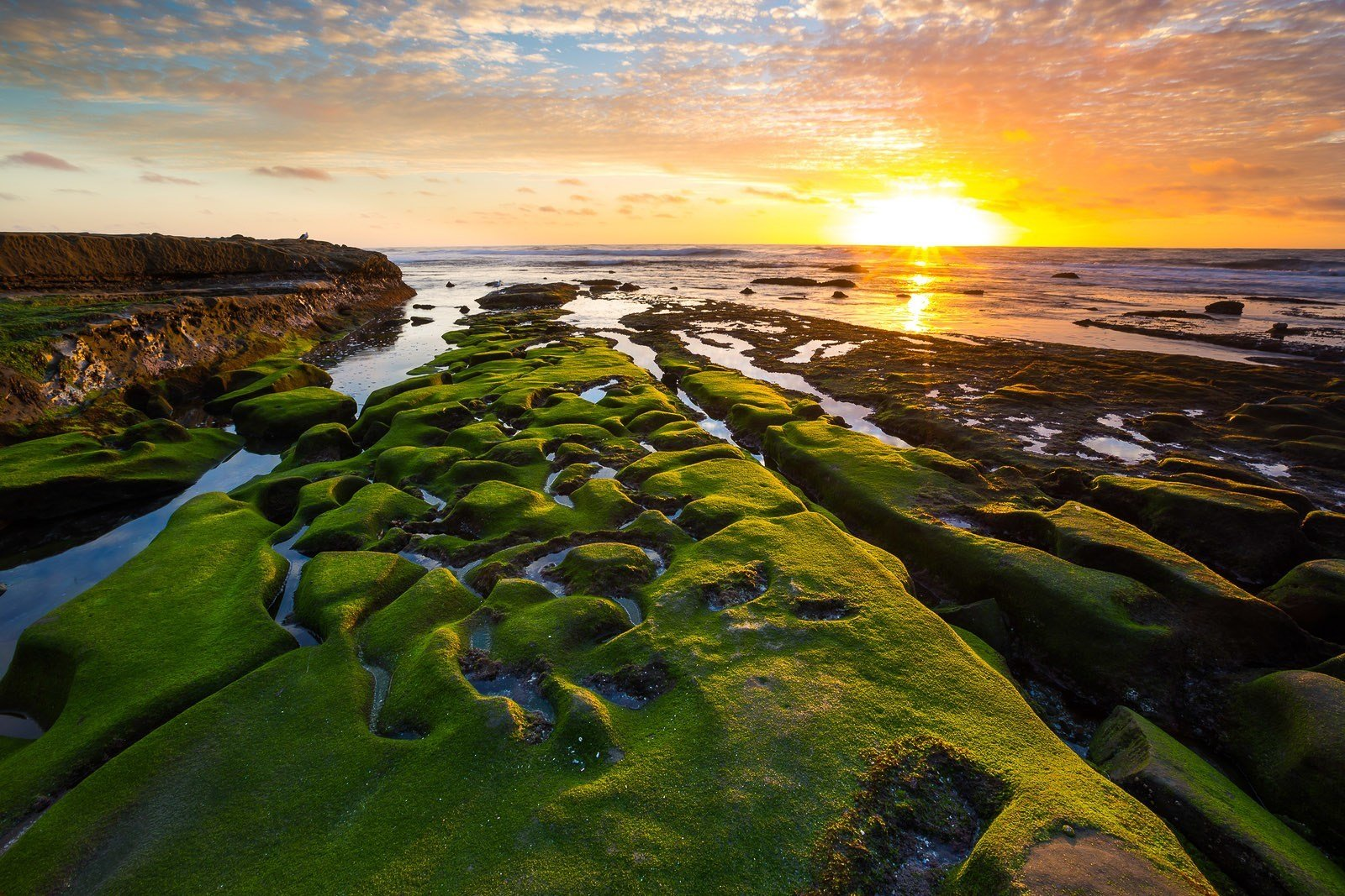 best tide pools in la jolla