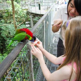 What It's Like to Take a Feeding Frenzy Tour at Singapore's Jurong Bird Park