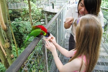 The Jurong Bird Park is a must-see attraction in Singapore with kids