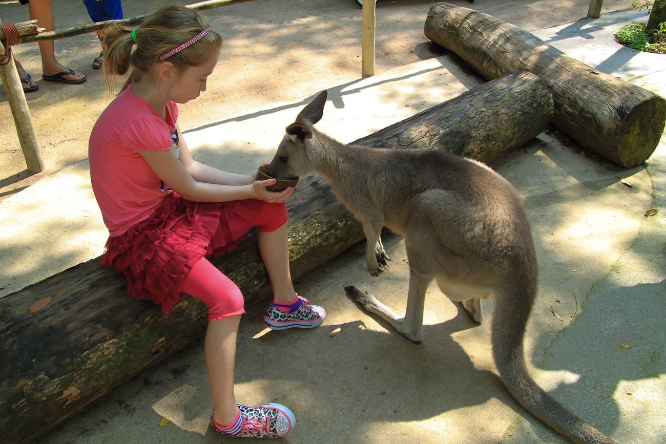 The Singapore Zoo is a must-see attraction