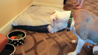 West Inn and Suites Pet Friendly San Diego Hotel