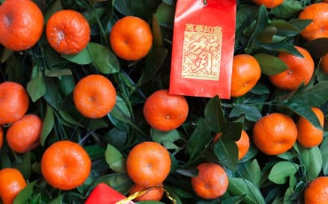 Citrus Trees for Chinese New Year