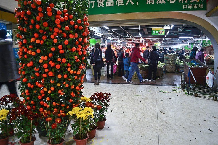 mandarin orange tree decoration for chinese new year