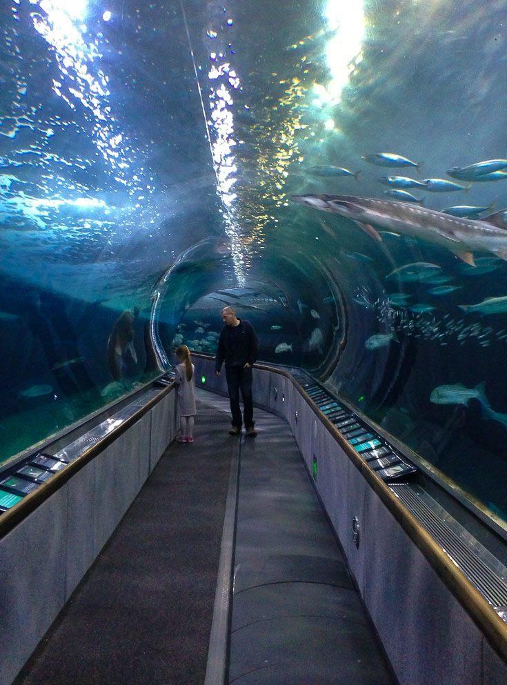 mandarin oriental hotel san francisco with kids aquarium of the bay