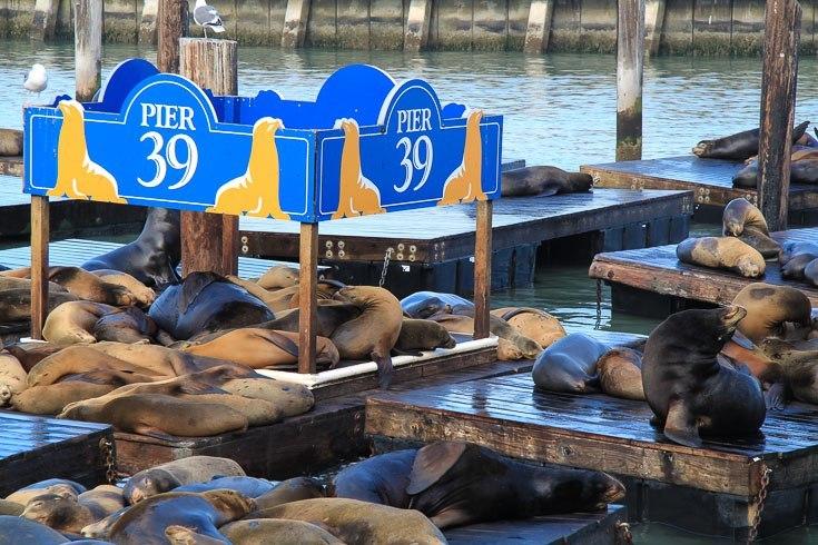 mandarin oriental hotel san francisco with kids pier 39 seals