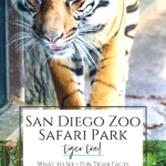 Tiger Trail is the conservation-minded Sumatran tiger exhibit at San Diego Zoo Safari Park. As a member, I share our favorite things to do and see.