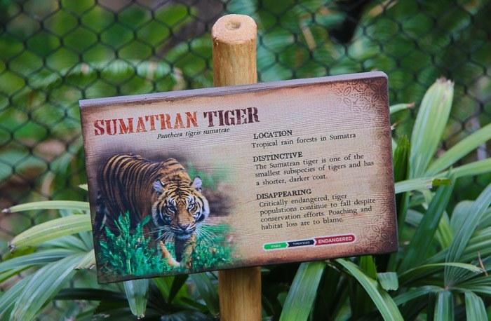 san diego zoo safari park tiger trail kids